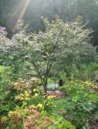 The Sustainable Garden