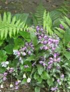 Serendipity in the garden