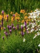 A little bit of meadow