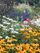 High Summer in the Garden
