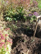 Fall: the perfect time for garden projects