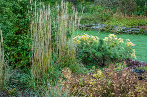 Feather reed grass (Calamagrostis acutiflora) and Chrysanthemim 'Mary Stoker