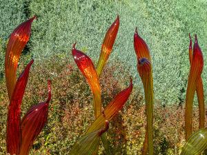 Dale Chihuly at Denver Botanic Gardens JHI-0835