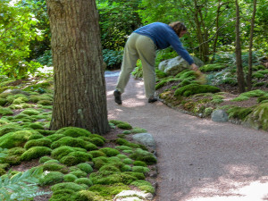 Sweeping the moss: a morning ritual