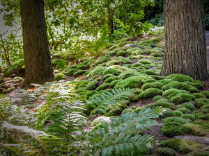 A mossy carpet