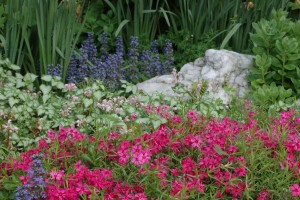 Bright pink Moss Phlox with Dead Nettle, Lamium 'Pink Pewter'.